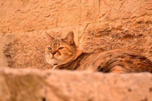 Tomcat, žingsnis, poilsis, Tomcat