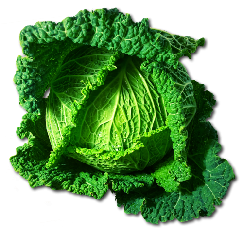 kohl savoy vegetables