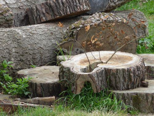 konar trunk wood
