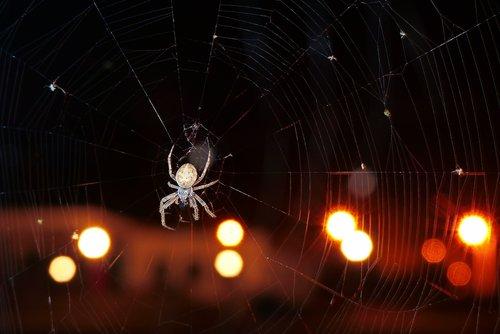 kołosz slit  arachnids  insect