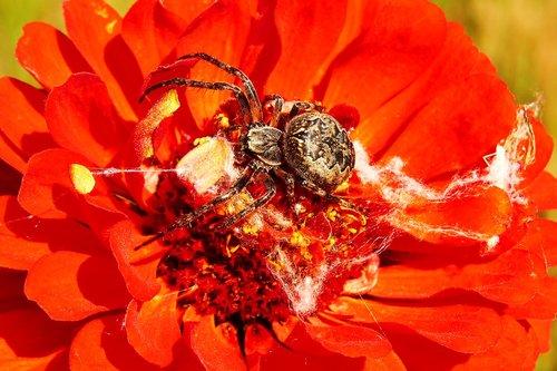 kołosz slit  insect  arachnids
