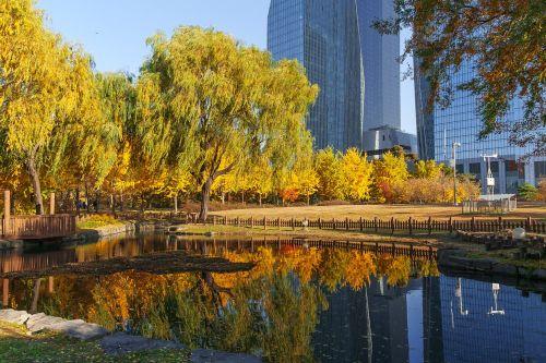 Korėja,Seulas,Yeouido parkas,parkas,miesto parkas,Han upė,ruduo,patranka,fotoaparatas,žolė,tvenkinys,rudens lapai,ginkmedis,denio,vaikščioti,oranžinė,pastatas,pertrauka,Spalio mėn,mediena,ekologinis parkas,Wangbeodeul,gluosnis,vėjas,atspindėti,veidrodis