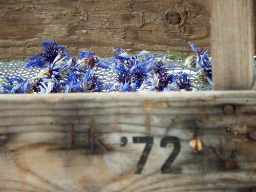 Cornflowers In Wooden Box