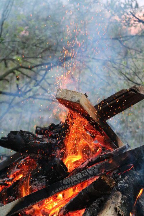 koster spring firewood