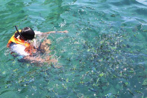 diving scuba diving krabi