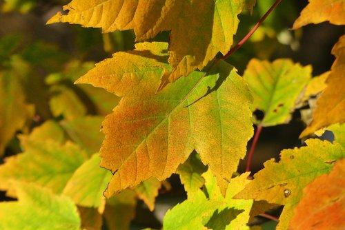 kraków  park  autumn
