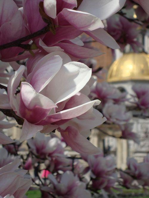 kraków poland flowers