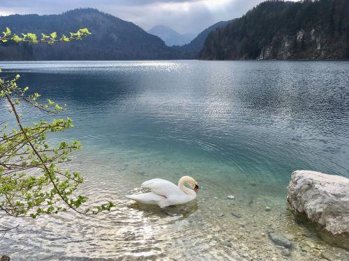 kristin lake swan