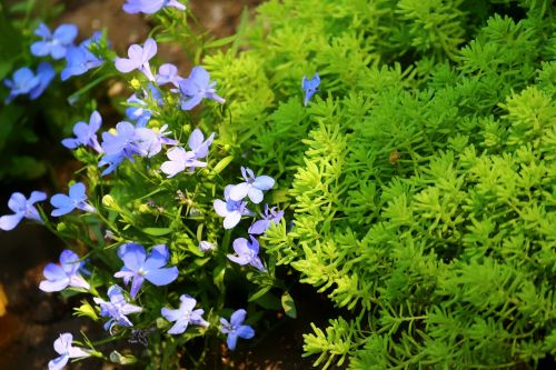 krupnyj plan moss flowers