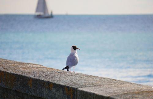 kajakas, paukštis, laukinė gamta, gyvūnas, paukštis & nbsp, žiūri, horizontas, kaukolė ir horizontas