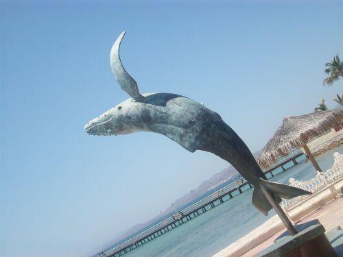 la paz mexico whale
