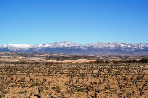 la rioja logroño vineyards