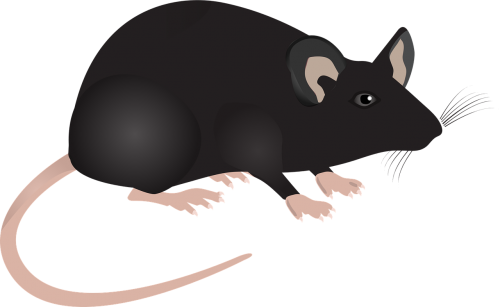 lab mouse mouse science
