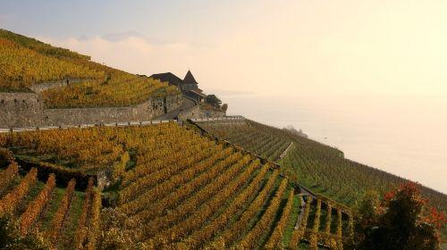 lac leman vineyards viticulture