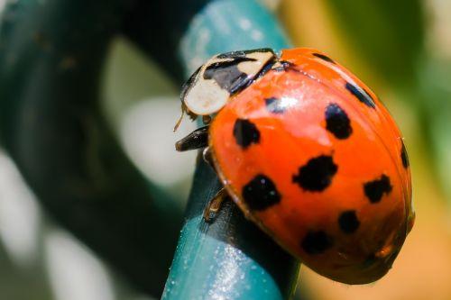 lady bird ladybird