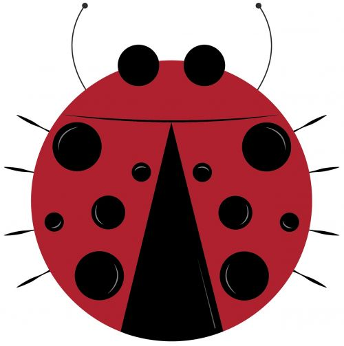 lady bug bug insect