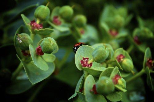 lady bug  insect  bug