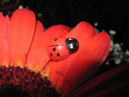 Ladybird On Orange Gerbera
