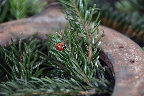 ladybug lucky charm deco