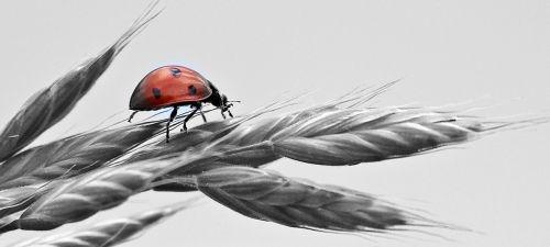ladybug ear sky