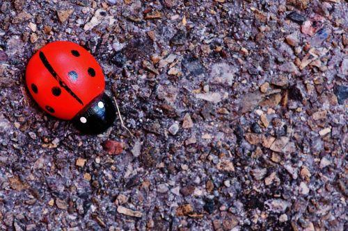 ladybug wood greeting card