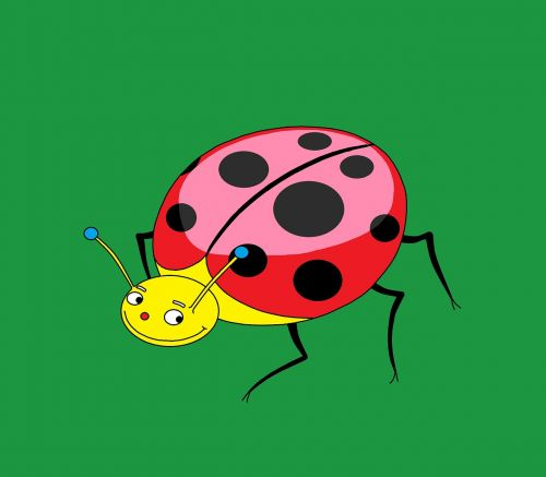 Boružė,vabzdys,raudona,piešimas,gyvūnas,klaidas,gamta,vabalas meloideo,vabalas,bulvė,laukas,sodas