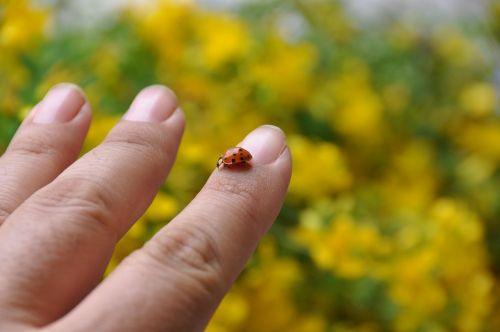 ladybug yellow hand