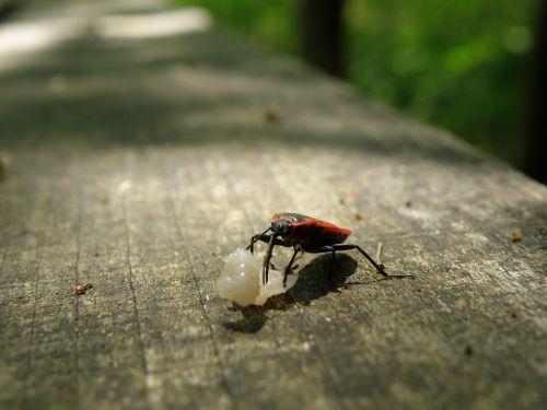 ladybug macro error