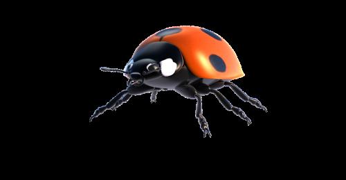 ladybug lucky ladybug isolated