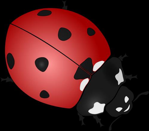 ladybug insect beetles