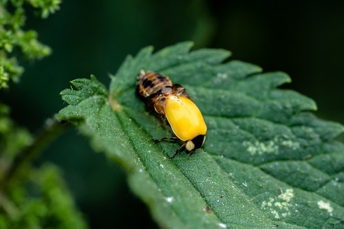 ladybug  birth  hatching ladybug