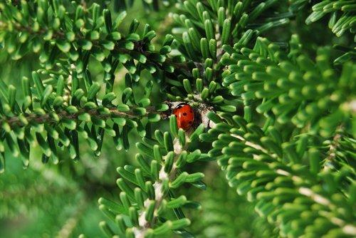 ladybug  garden  insect