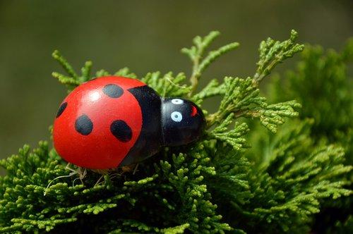 ladybug  spotted  beetle