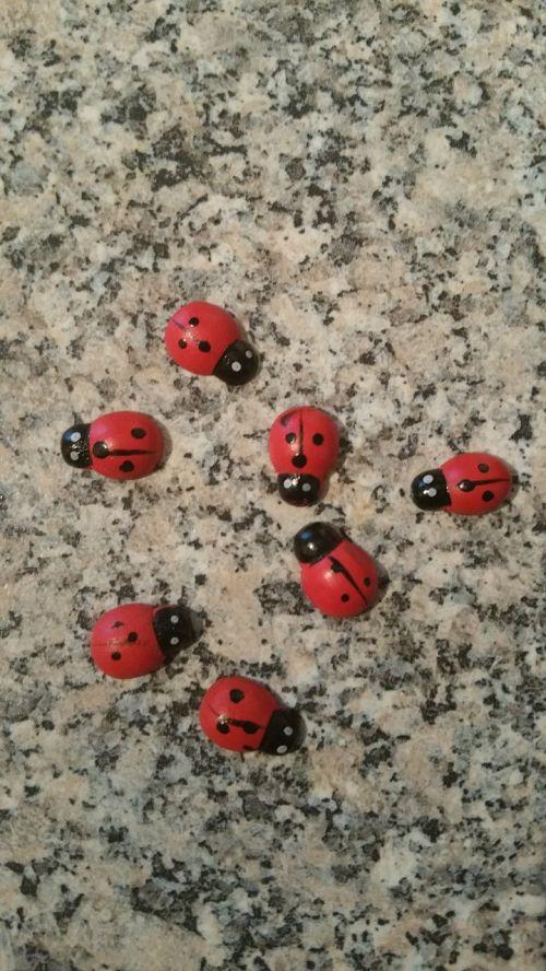 ladybug luck lucky charm