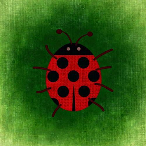 ladybug points funny