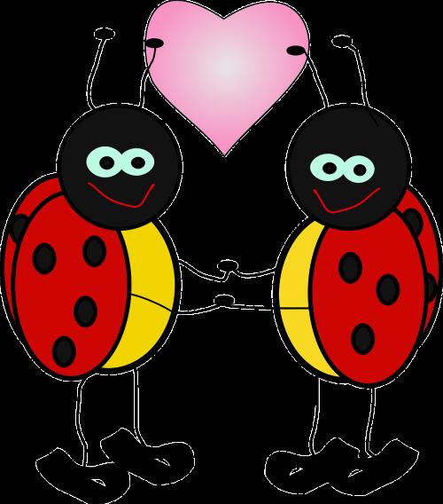ladybugs insect lady