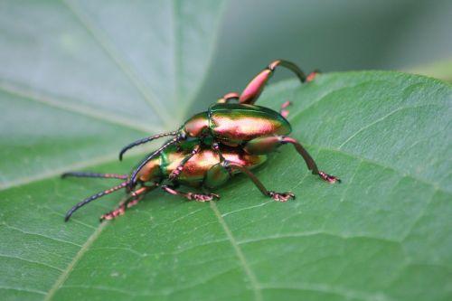 ladybugs insects macro