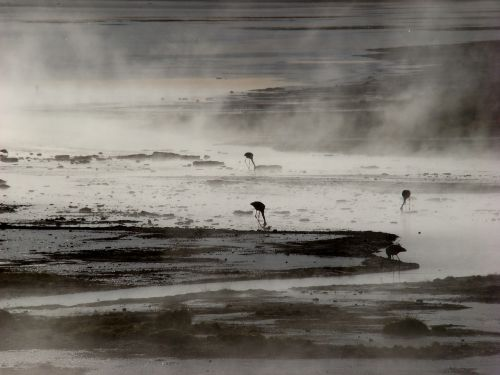 laguna,flamandų,Bolivija