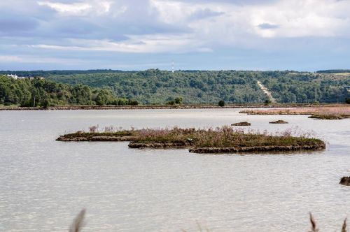 laguna tar nature