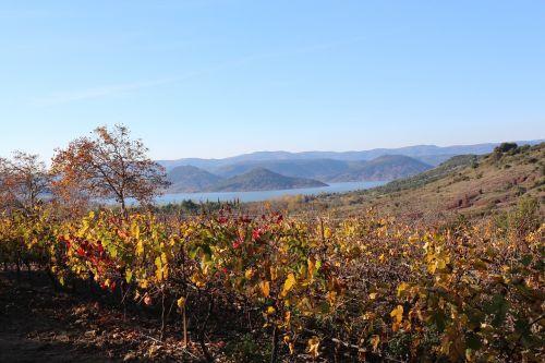 lake vine fall