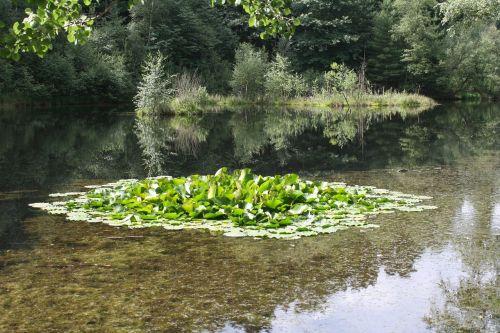 lake pools biotope
