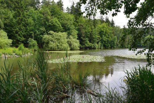 lake pond nuphar