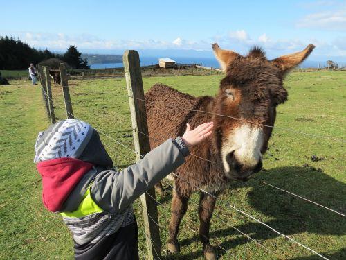 lake donkey child