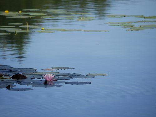 lake water calm