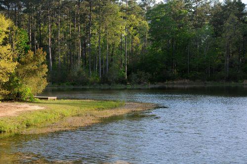 lake nature water trees