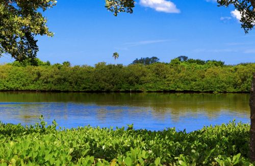 lake mangrove swamp forest