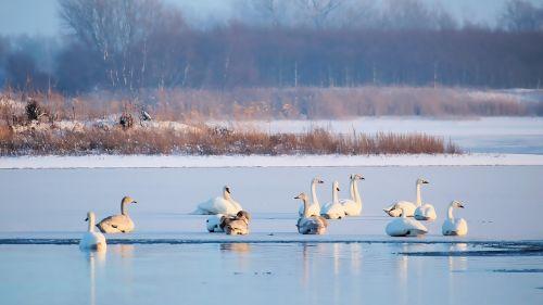 lake waters frozen