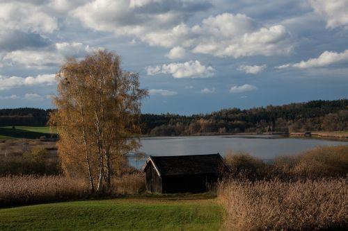 lake tree meadow
