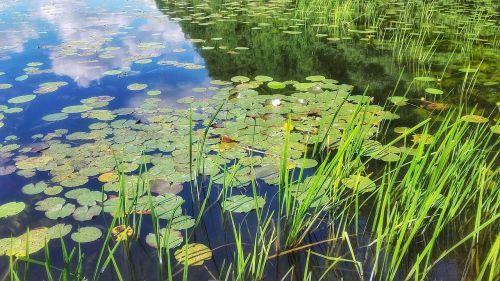 lake water pond