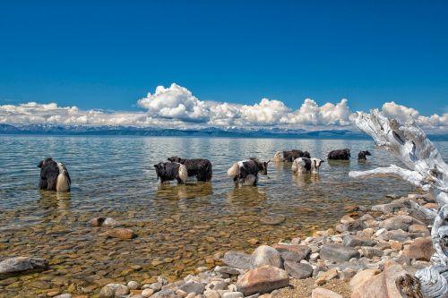 lake fax lake yak